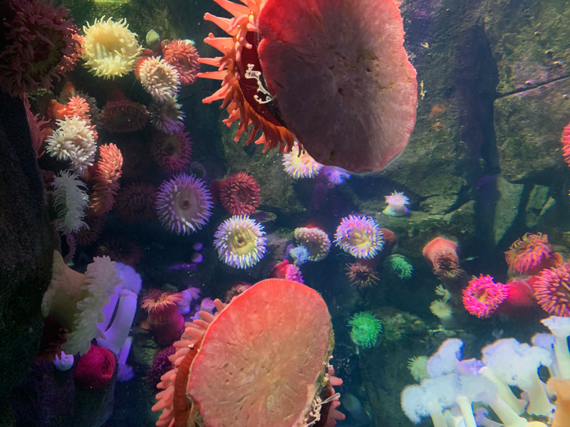 2020 Valentine's Day Package at Ripley's Aquarium in Toronto